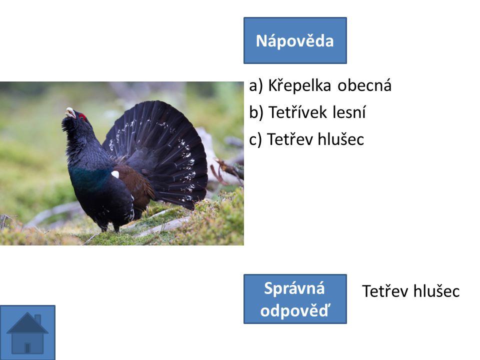 a) Křepelka obecná b) Tetřívek lesní c) Tetřev hlušec Nápověda Správná odpověď Tetřev hlušec