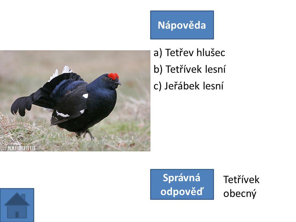 a) Tetřev hlušec b) Tetřívek lesní c) Jeřábek lesní Nápověda Správná odpověď Tetřívek obecný