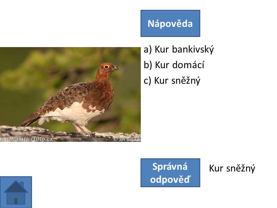 a) Kur bankivský b) Kur domácí c) Kur sněžný Nápověda Správná odpověď Kur sněžný