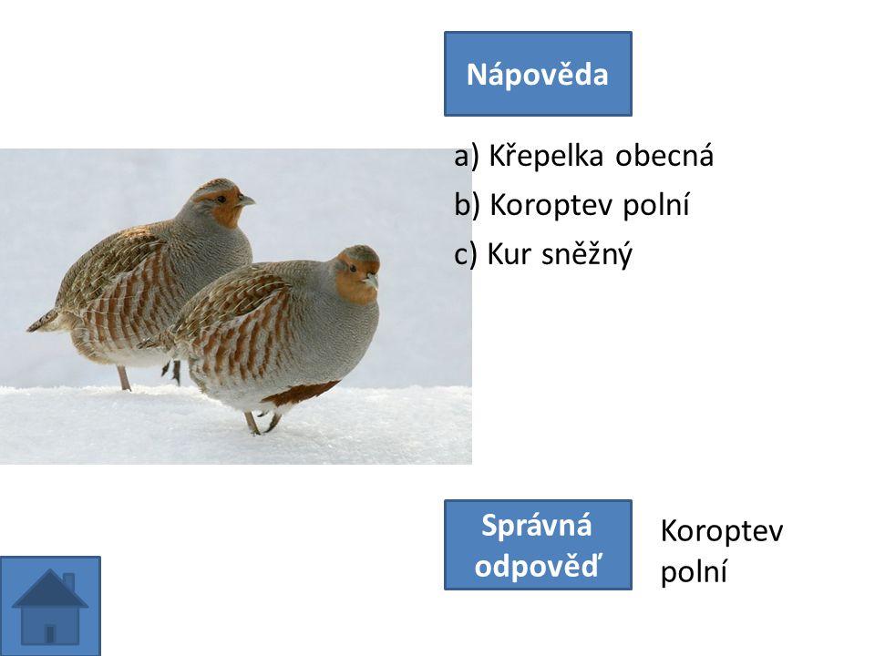 a) Křepelka obecná b) Koroptev polní c) Kur sněžný Nápověda Správná odpověď Koroptev polní