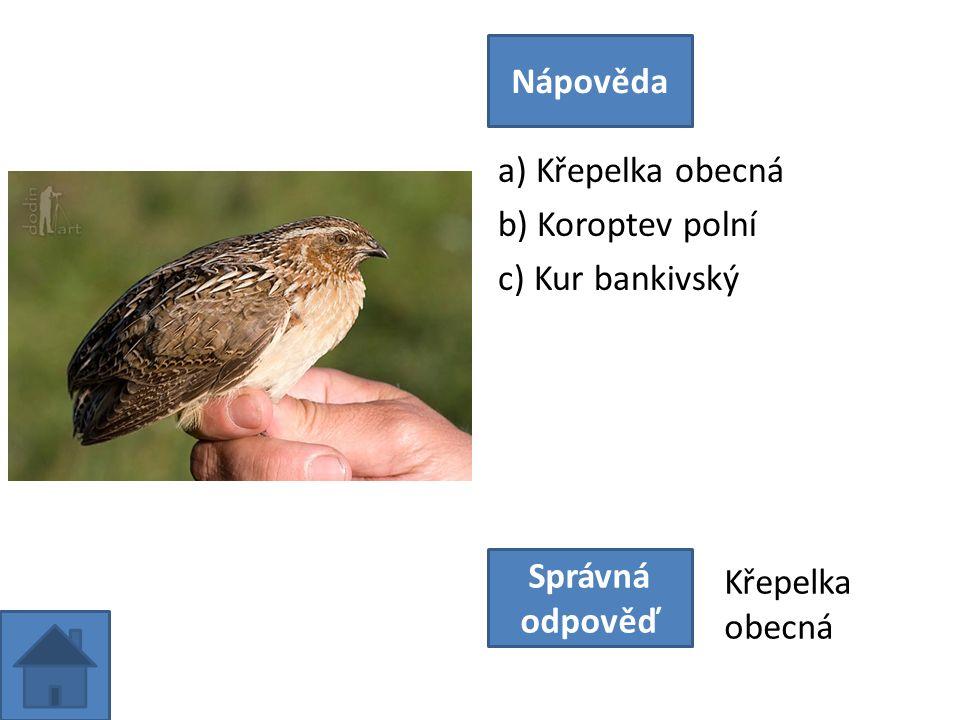 a) Křepelka obecná b) Koroptev polní c) Kur bankivský Nápověda Správná odpověď Křepelka obecná