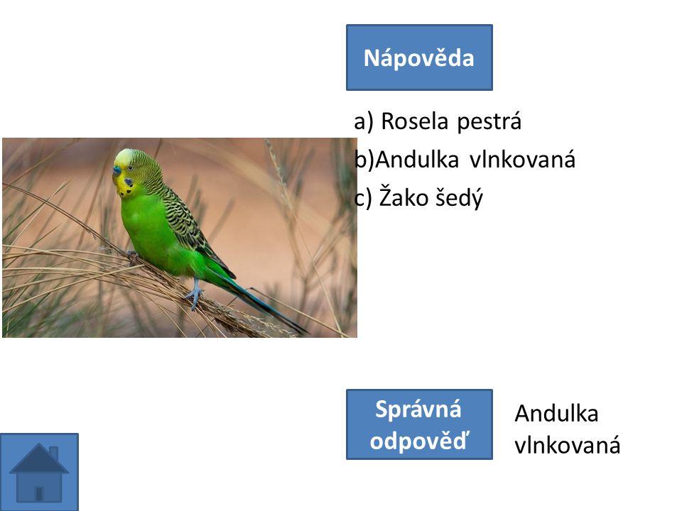 a) Rosela pestrá b)Andulka vlnkovaná c) Žako šedý Nápověda Správná odpověď Andulka vlnkovaná