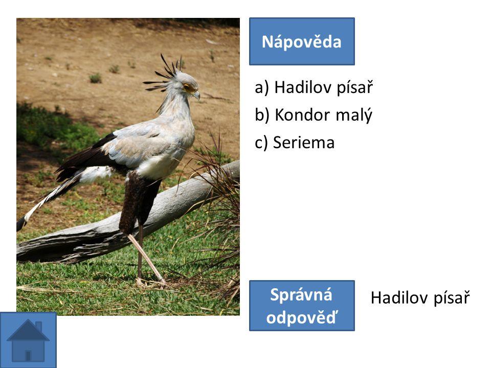 a) Hadilov písař b) Kondor malý c) Seriema Nápověda Správná odpověď Hadilov písař