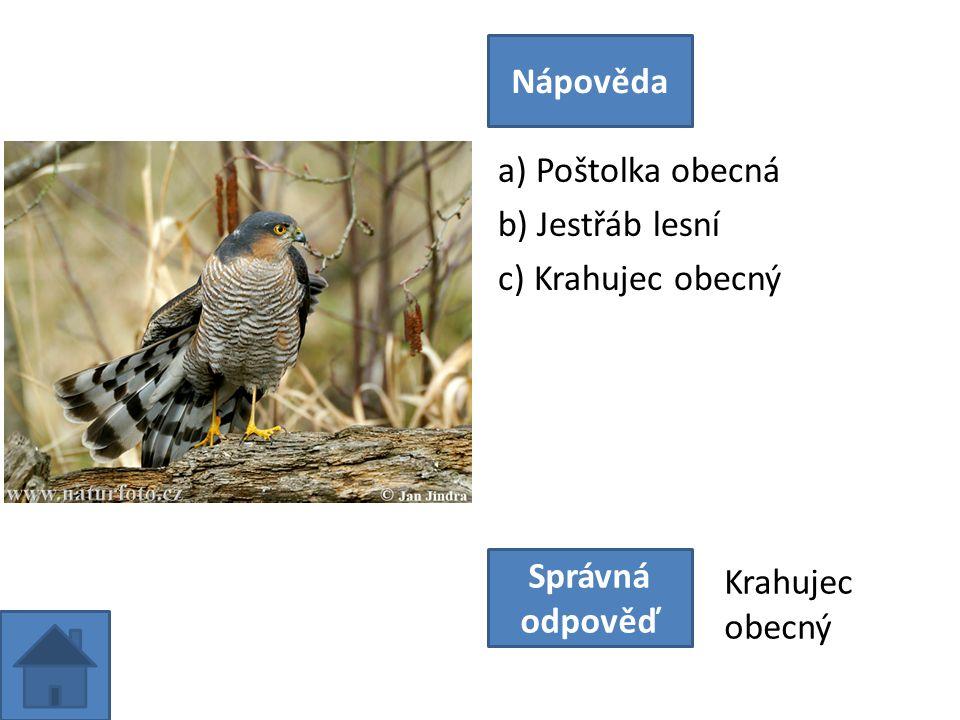 a) Sokol stěhovavý b) Jestřáb lesní c) Luňák hnědý Nápověda Správná odpověď Jestřáb lesní