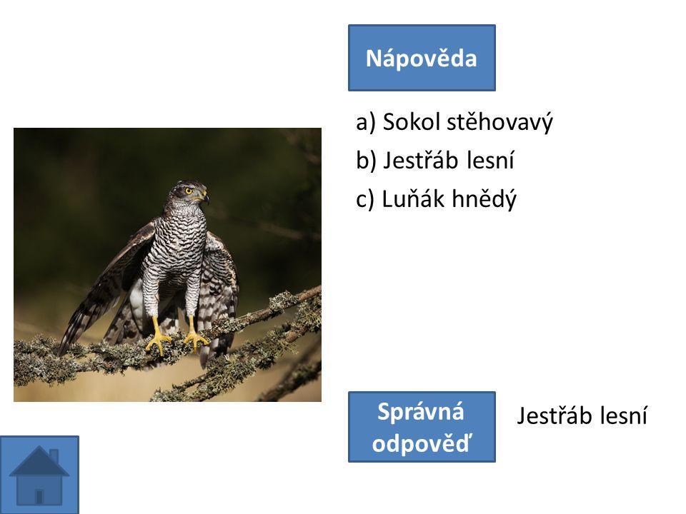 a) Perlička kropenatá b) Krocan divoký c) Tetřev hlušec Nápověda Správná odpověď Krocan divoký
