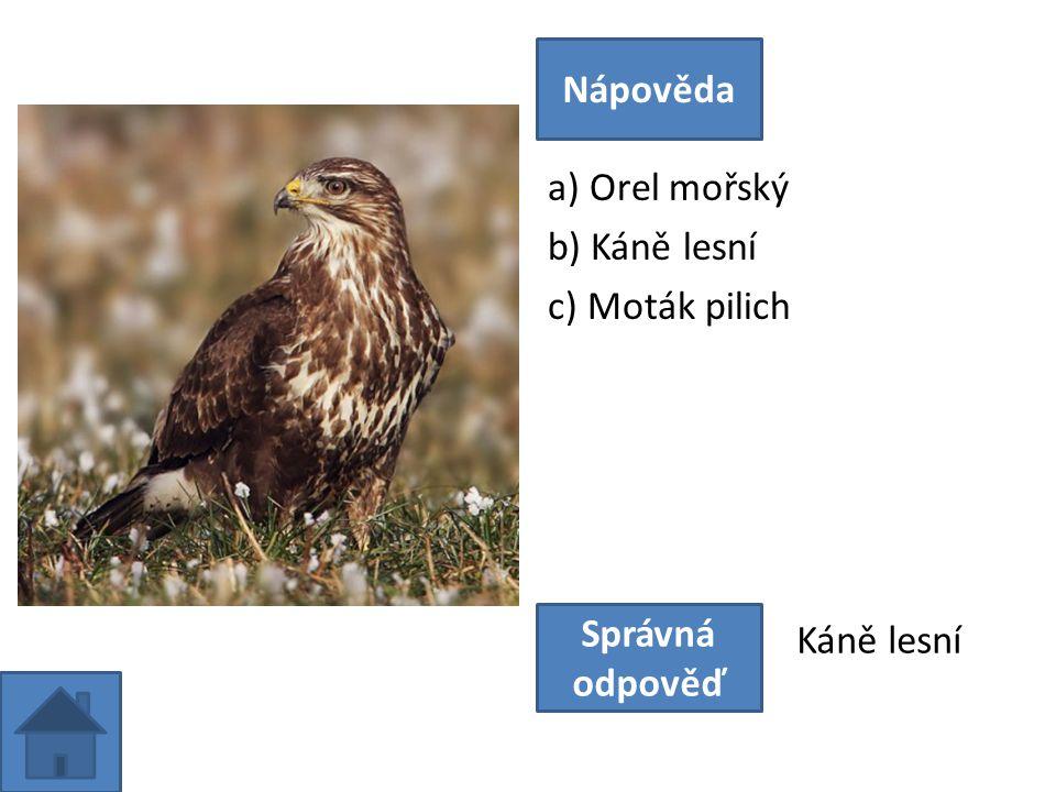 a) Orel mořský b) Káně lesní c) Moták pilich Nápověda Správná odpověď Káně lesní