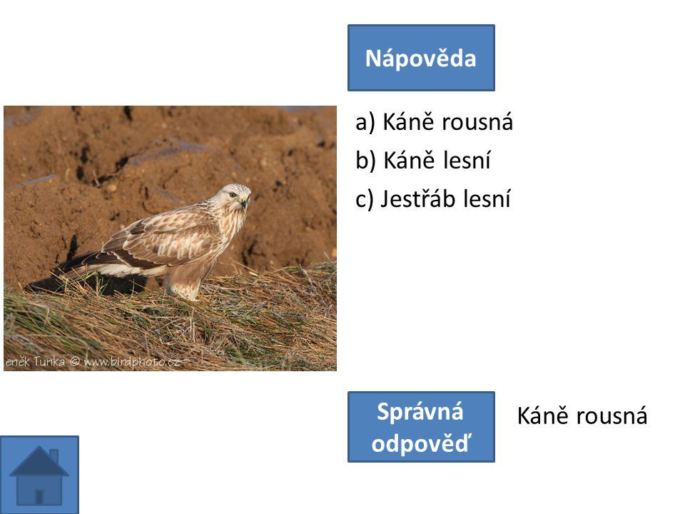 a) Jeřábek lesní b) Koroptev polní c) Tetřívek obecný Nápověda Správná odpověď Jeřábek lesní