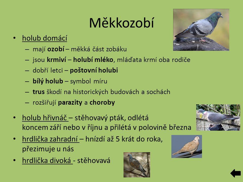Měkkozobí holub domácí – mají ozobí – měkká část zobáku – jsou krmiví – holubí mléko, mláďata krmí oba rodiče – dobří letci – poštovní holubi – bílý holub – symbol míru – trus škodí na historických budovách a sochách – rozšiřují parazity a choroby holub hřivnáč – stěhovavý pták, odlétá koncem září nebo v říjnu a přilétá v polovině března hrdlička zahradní – hnízdí až 5 krát do roka, přezimuje u nás hrdlička divoká - stěhovavá