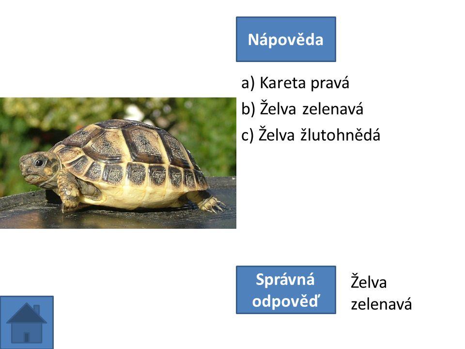 a) Kareta pravá b) Želva zelenavá c) Želva žlutohnědá Nápověda Správná odpověď Želva zelenavá