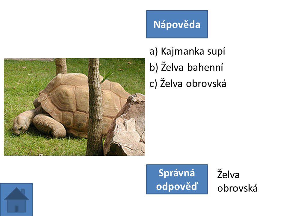 a) Kajmanka supí b) Želva bahenní c) Želva obrovská Nápověda Správná odpověď Želva obrovská