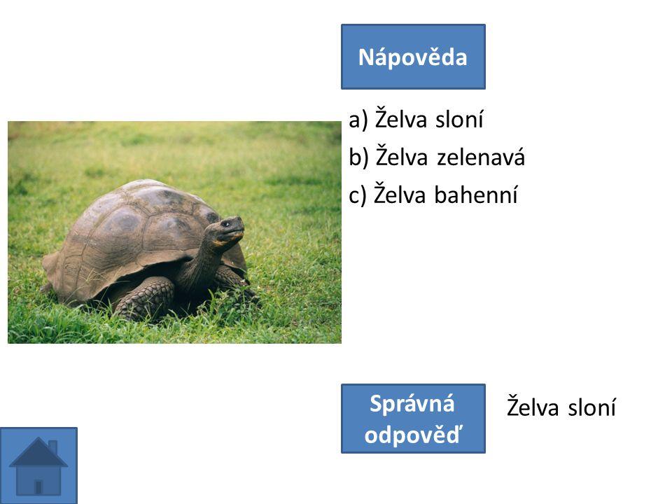 a) Želva sloní b) Želva zelenavá c) Želva bahenní Nápověda Správná odpověď Želva sloní
