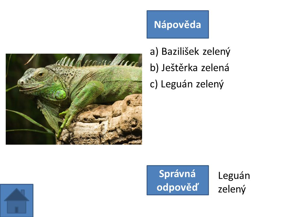 a) Bazilišek zelený b) Ještěrka zelená c) Leguán zelený Nápověda Správná odpověď Leguán zelený