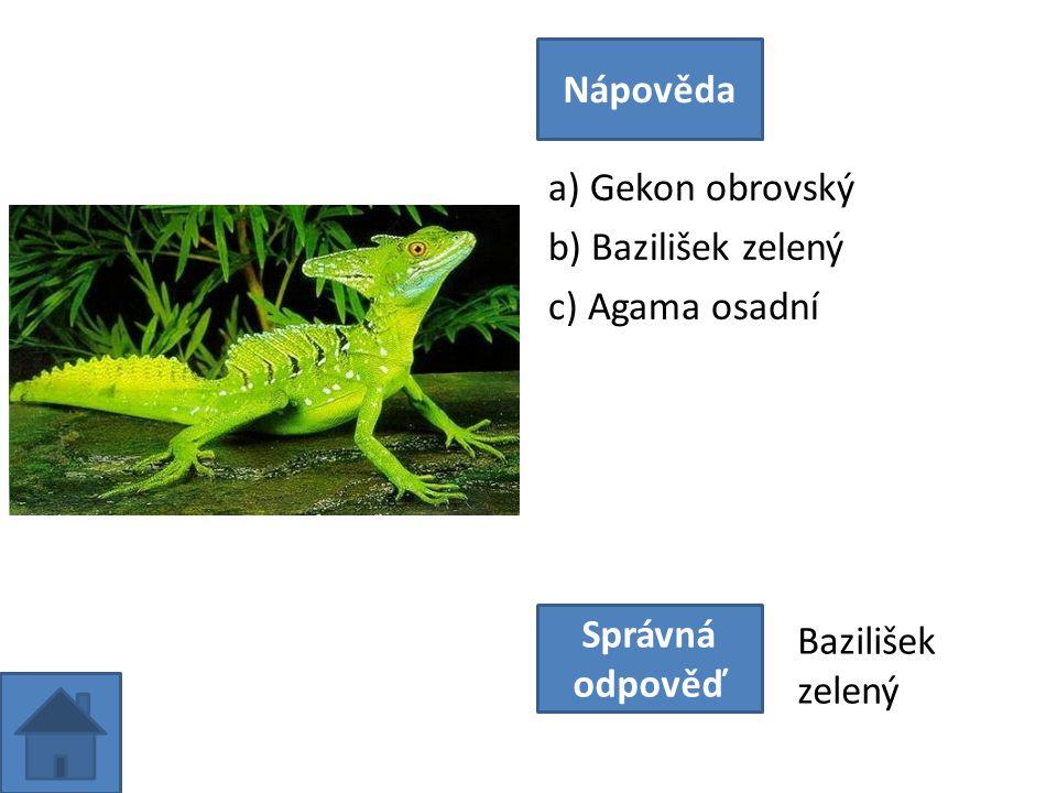 a) Gekon obrovský b) Bazilišek zelený c) Agama osadní Nápověda Správná odpověď Bazilišek zelený