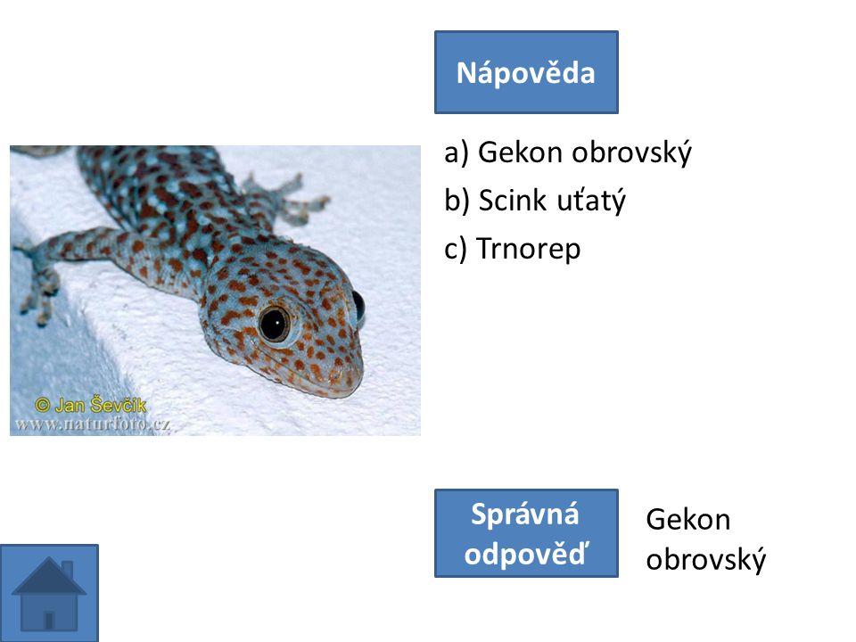 a) Gekon obrovský b) Scink uťatý c) Trnorep Nápověda Správná odpověď Gekon obrovský