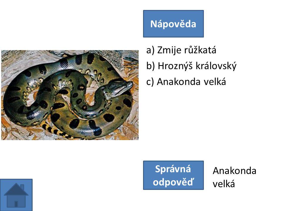a) Zmije růžkatá b) Hroznýš královský c) Anakonda velká Nápověda Správná odpověď Anakonda velká