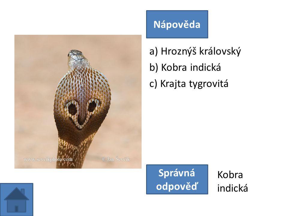 a) Hroznýš královský b) Kobra indická c) Krajta tygrovitá Nápověda Správná odpověď Kobra indická