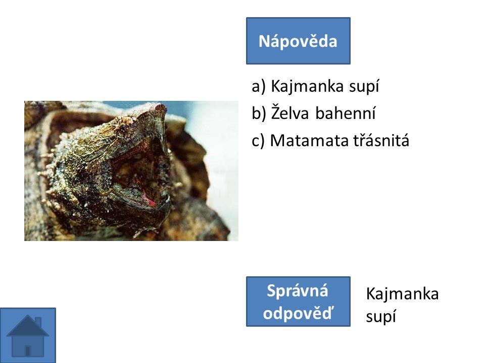 a) Kajmanka supí b) Želva bahenní c) Matamata třásnitá Nápověda Správná odpověď Kajmanka supí
