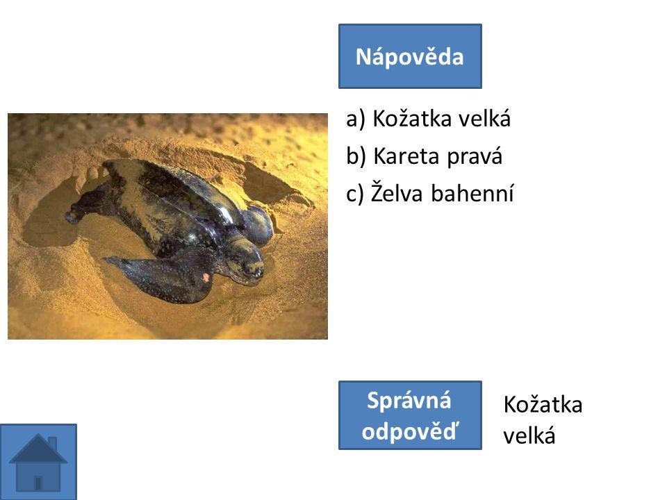 a) Kožatka velká b) Kareta pravá c) Želva bahenní Nápověda Správná odpověď Kožatka velká