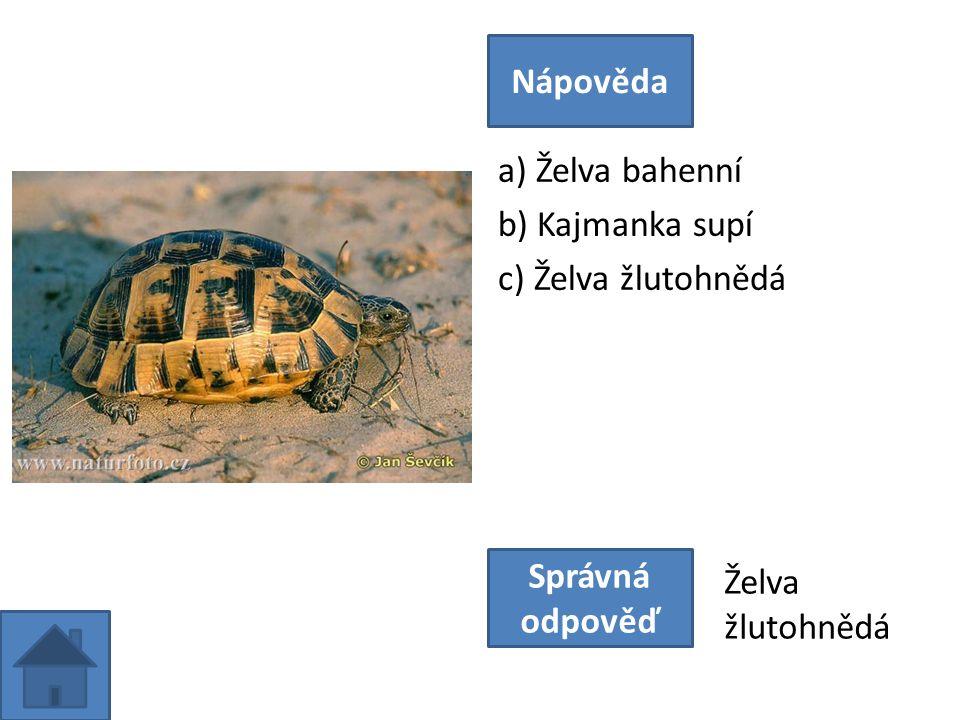 a) Želva bahenní b) Kajmanka supí c) Želva žlutohnědá Nápověda Správná odpověď Želva žlutohnědá