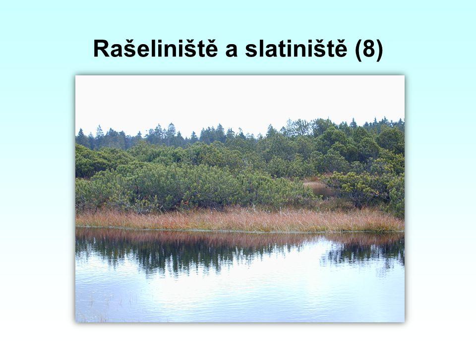 Rašeliniště a slatiniště (8)