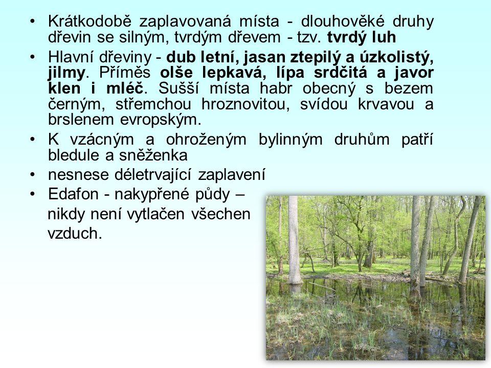 Krátkodobě zaplavovaná místa - dlouhověké druhy dřevin se silným, tvrdým dřevem - tzv. tvrdý luh Hlavní dřeviny - dub letní, jasan ztepilý a úzkolistý