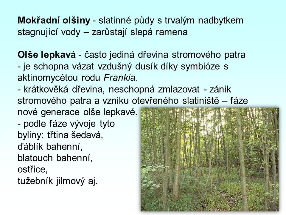 Mokřadní olšiny - slatinné půdy s trvalým nadbytkem stagnující vody – zarůstají slepá ramena Olše lepkavá - často jediná dřevina stromového patra - je