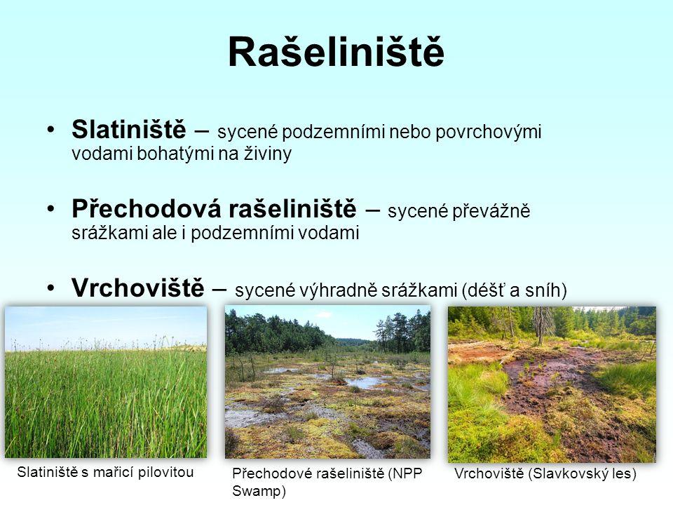 Rašeliniště Slatiniště – sycené podzemními nebo povrchovými vodami bohatými na živiny Přechodová rašeliniště – sycené převážně srážkami ale i podzemní