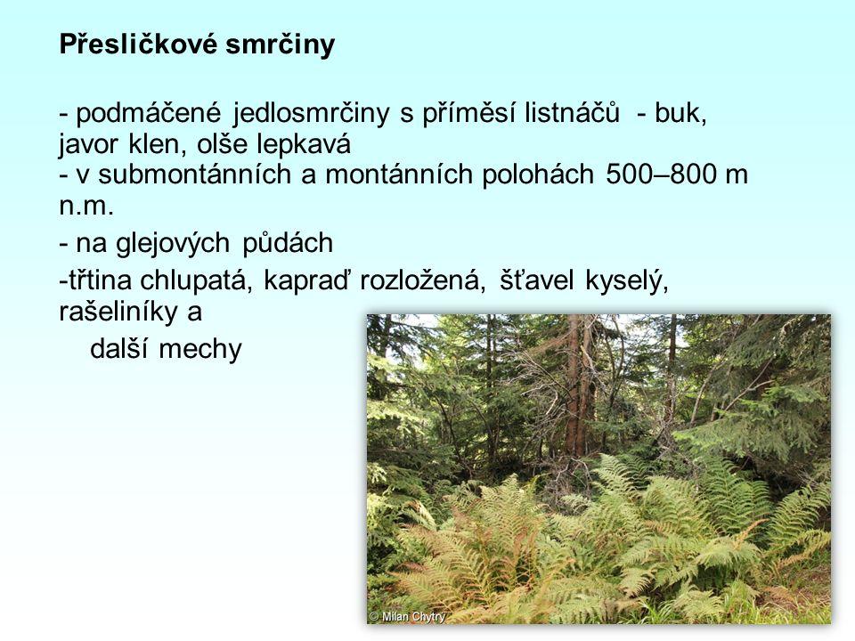 Přesličkové smrčiny - podmáčené jedlosmrčiny s příměsí listnáčů - buk, javor klen, olše lepkavá - v submontánních a montánních polohách 500–800 m n.m.