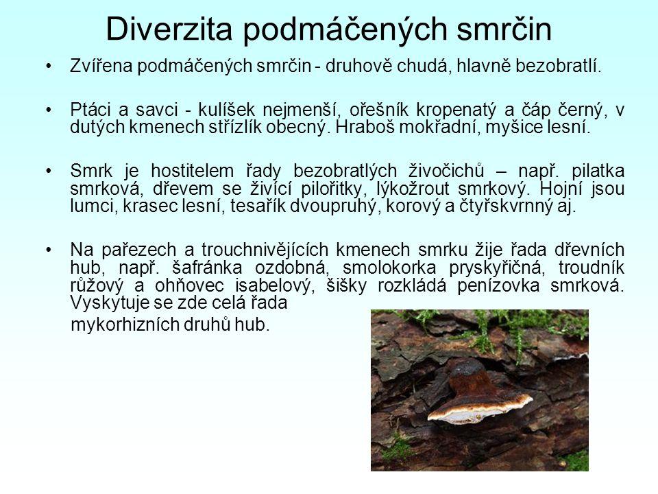 Diverzita podmáčených smrčin Zvířena podmáčených smrčin - druhově chudá, hlavně bezobratlí. Ptáci a savci - kulíšek nejmenší, ořešník kropenatý a čáp