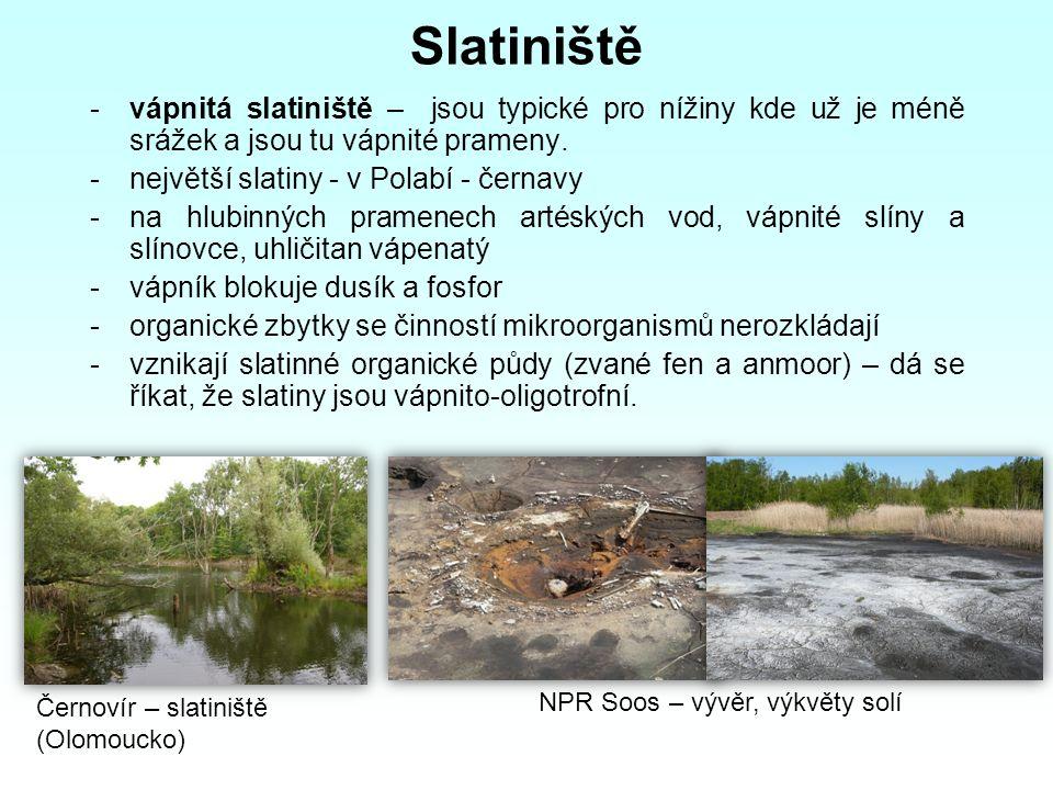Slatiniště -vápnitá slatiniště – jsou typické pro nížiny kde už je méně srážek a jsou tu vápnité prameny. -největší slatiny - v Polabí - černavy -na h