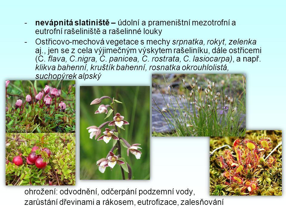-nevápnitá slatiniště – údolní a prameništní mezotrofní a eutrofní rašeliniště a rašelinné louky -Ostřicovo-mechová vegetace s mechy srpnatka, rokyt,