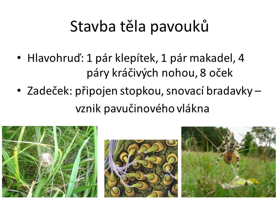 Stavba těla pavouků Hlavohruď: 1 pár klepítek, 1 pár makadel, 4 páry kráčivých nohou, 8 oček Zadeček: připojen stopkou, snovací bradavky – vznik pavučinového vlákna