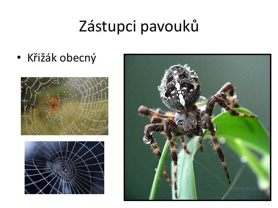 Zástupci pavouků Křižák obecný