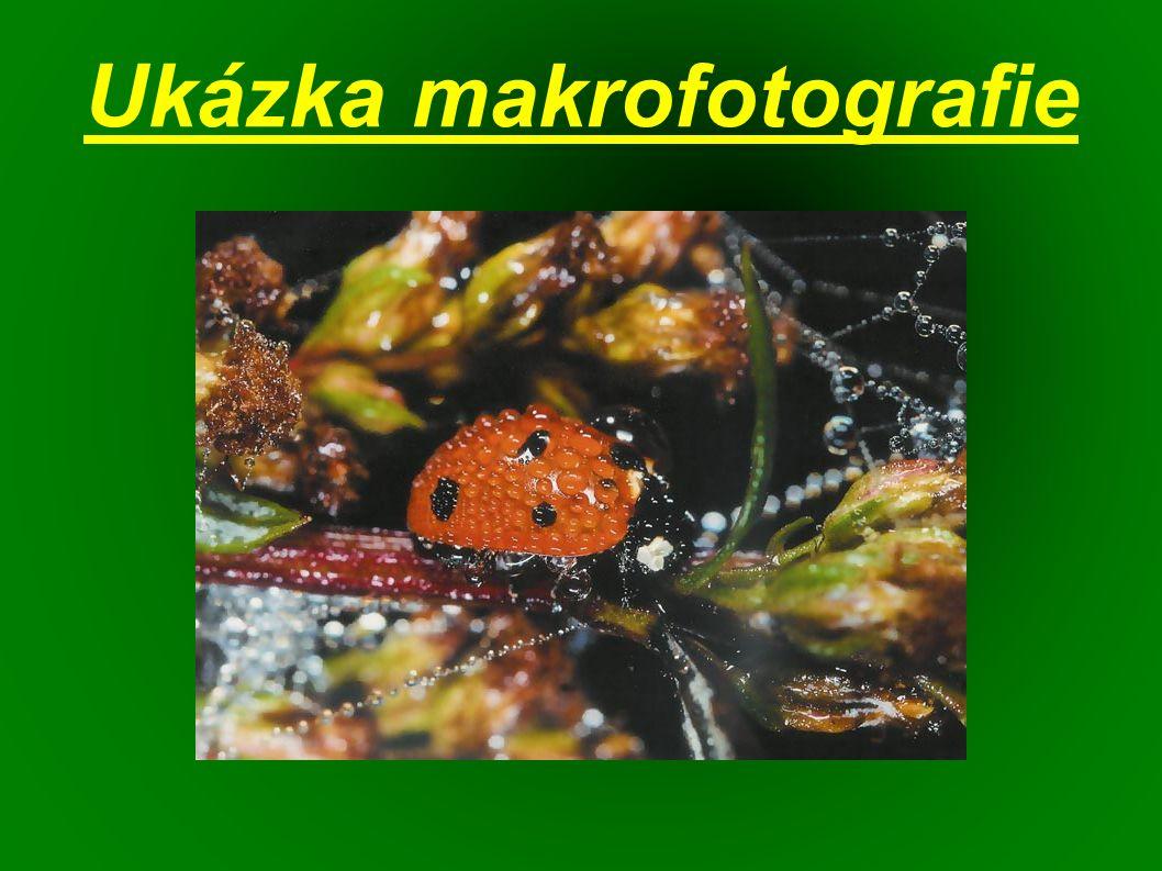 Ukázka makrofotografie