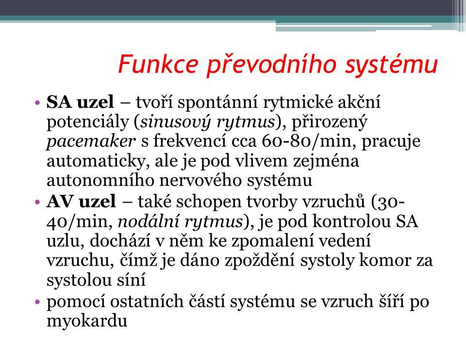 Funkce převodního systému SA uzel – tvoří spontánní rytmické akční potenciály (sinusový rytmus), přirozený pacemaker s frekvencí cca 60-80/min, pracuje automaticky, ale je pod vlivem zejména autonomního nervového systému AV uzel – také schopen tvorby vzruchů (30- 40/min, nodální rytmus), je pod kontrolou SA uzlu, dochází v něm ke zpomalení vedení vzruchu, čímž je dáno zpoždění systoly komor za systolou síní pomocí ostatních částí systému se vzruch šíří po myokardu