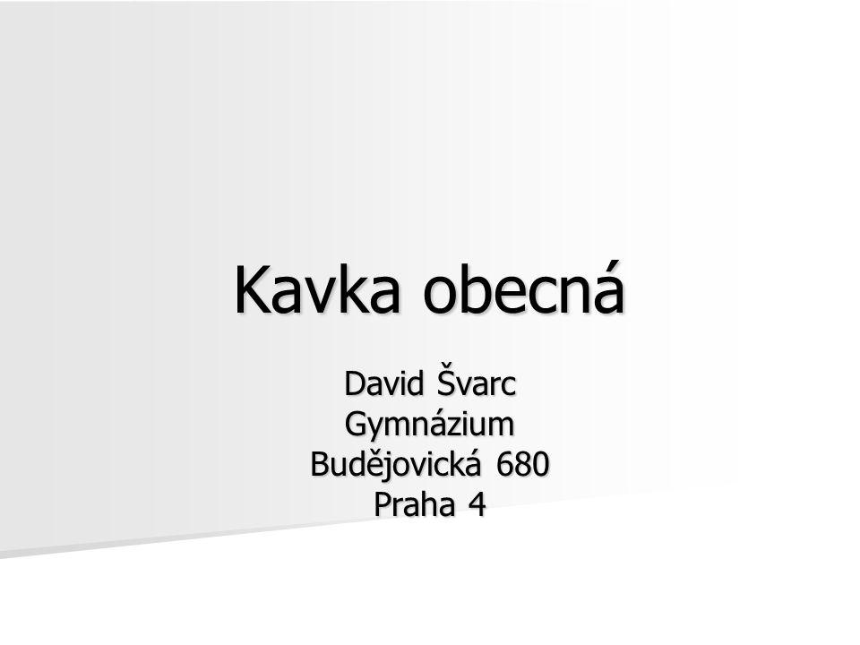 Kavka obecná David Švarc Gymnázium Budějovická 680 Praha 4