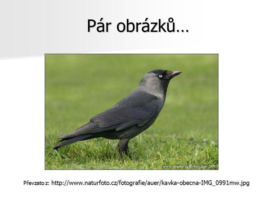 Převzato z: http://www.naturfoto.cz/fotografie/auer/kavka-obecna-IMG_0991mw.jpg Pár obrázků…