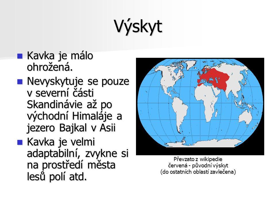 Výskyt Kavka je málo ohrožená. Kavka je málo ohrožená. Nevyskytuje se pouze v severní části Skandinávie až po východní Himaláje a jezero Bajkal v Asii