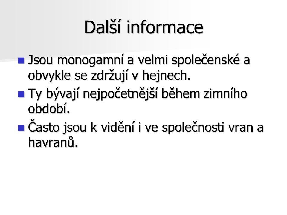 Další informace Jsou monogamní a velmi společenské a obvykle se zdržují v hejnech.