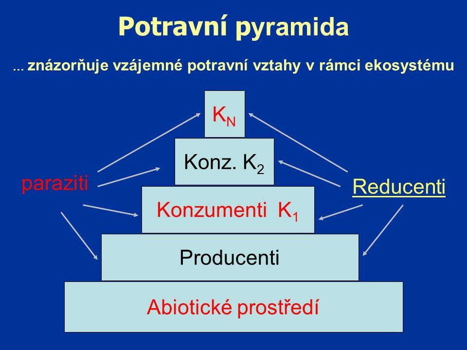 Potravní p yramida … znázorňuje vzájemné potravní vztahy v rámci ekosystému Abiotické prostředí Producenti Konzumenti K 1 Konz.