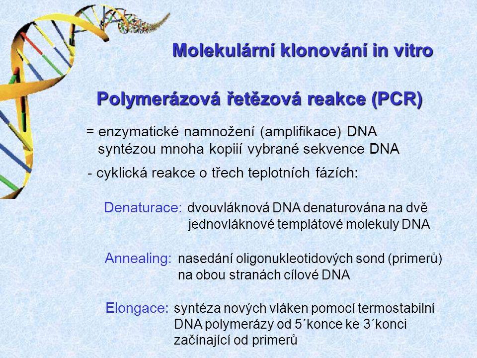 Polymerázová řetězová reakce (PCR) = enzymatické namnožení (amplifikace) DNA syntézou mnoha kopiií vybrané sekvence DNA - cyklická reakce o třech teplotních fázích: Denaturace: dvouvláknová DNA denaturována na dvě jednovláknové templátové molekuly DNA Annealing: nasedání oligonukleotidových sond (primerů) na obou stranách cílové DNA Elongace: syntéza nových vláken pomocí termostabilní DNA polymerázy od 5´konce ke 3´konci začínající od primerů Molekulární klonování in vitro