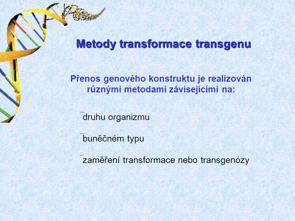 Mikroinjekce - požadovaný gen je přenesen do vajíčka těsně po jeho oplození (zygota) - provedení pomocí mikromanipulátoru pod kontrolou mikroskopu, injekcí o velikosti 2 – 5 pikolitrů - proces začlenění je náhodný - počet začleněných kopií je nekontrolovatelný od malého počtu do stovek kopií původního konstruktu - účinnost začlenění konstruktu 1:1000