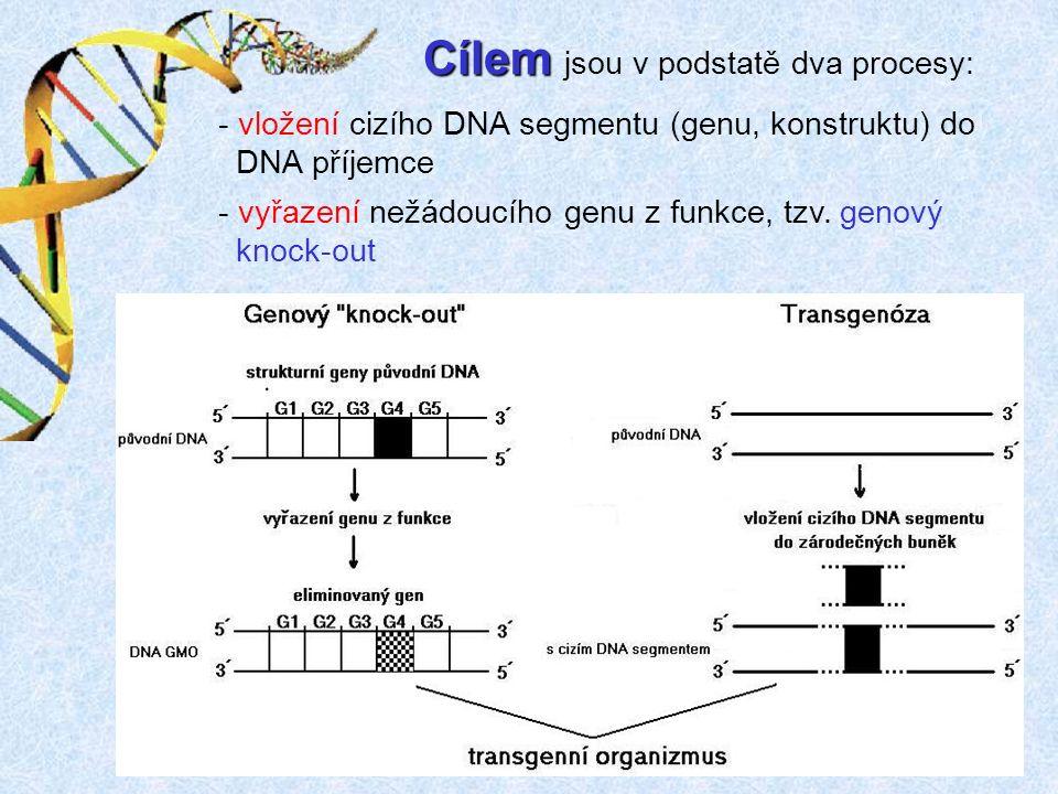 Cílem Cílem jsou v podstatě dva procesy: - vložení cizího DNA segmentu (genu, konstruktu) do DNA příjemce - vyřazení nežádoucího genu z funkce, tzv.