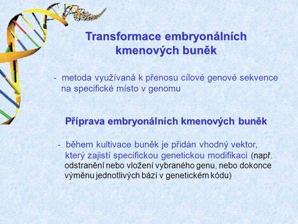 Transformace embryonálních kmenových buněk - metoda využívaná k přenosu cílové genové sekvence na specifické místo v genomu - během kultivace buněk je přidán vhodný vektor, který zajistí specifickou genetickou modifikaci (např.