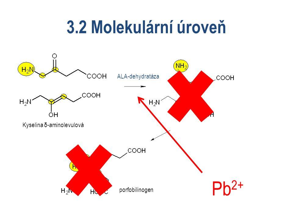 3.2 Molekulární úroveň Kyselina δ-aminolevulová porfobilinogen ALA-dehydratáza Pb 2+