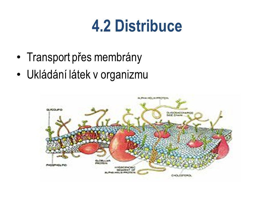 4.2 Distribuce Transport přes membrány Ukládání látek v organizmu