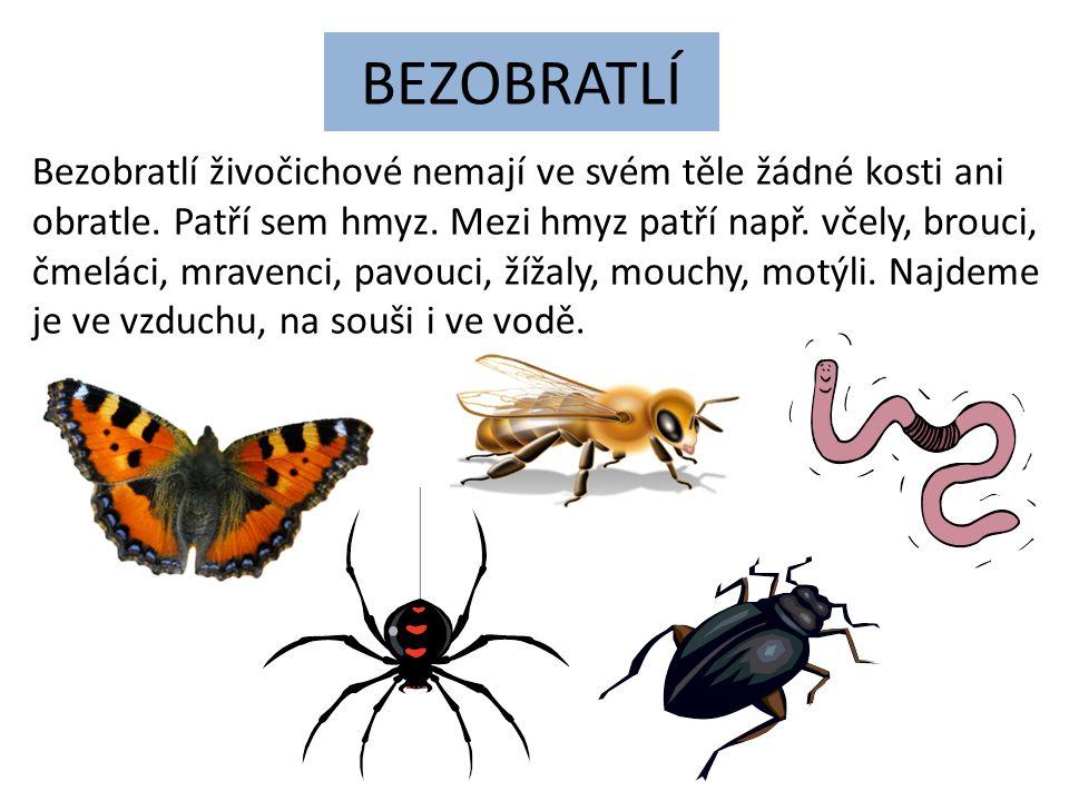 BEZOBRATLÍ Bezobratlí živočichové nemají ve svém těle žádné kosti ani obratle. Patří sem hmyz. Mezi hmyz patří např. včely, brouci, čmeláci, mravenci,