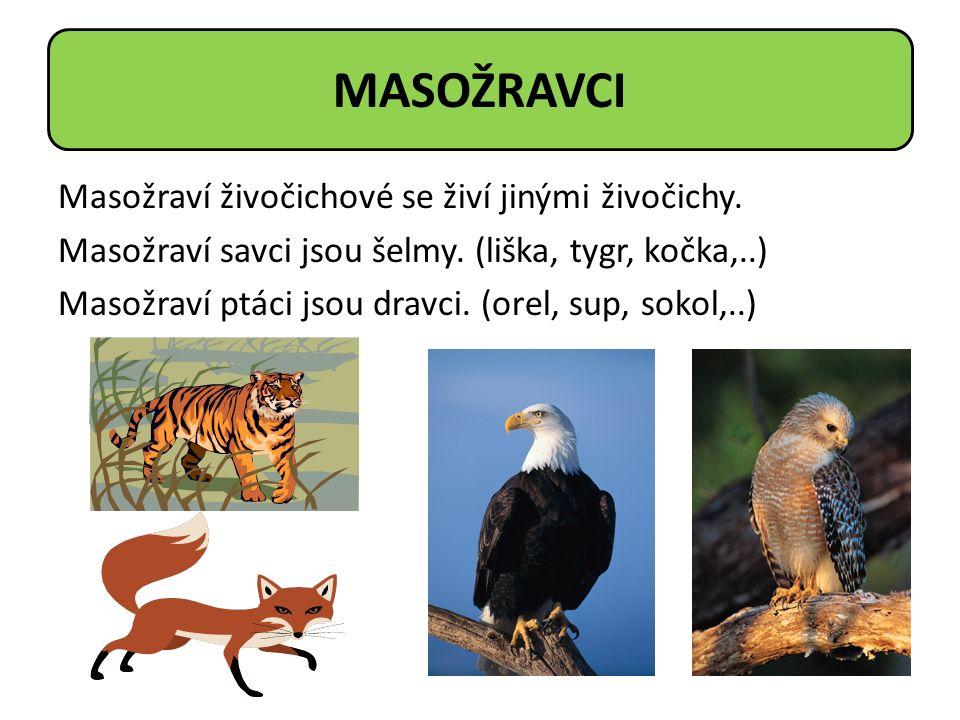 Masožraví živočichové se živí jinými živočichy. Masožraví savci jsou šelmy. (liška, tygr, kočka,..) Masožraví ptáci jsou dravci. (orel, sup, sokol,..)