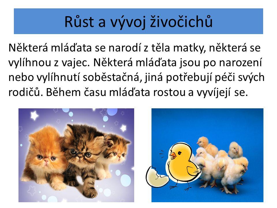 Růst a vývoj živočichů Některá mláďata se narodí z těla matky, některá se vylíhnou z vajec. Některá mláďata jsou po narození nebo vylíhnutí soběstačná