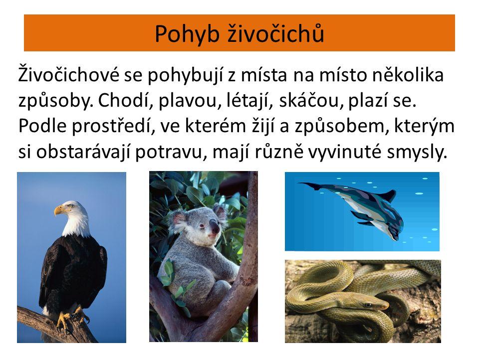 Pohyb živočichů Živočichové se pohybují z místa na místo několika způsoby. Chodí, plavou, létají, skáčou, plazí se. Podle prostředí, ve kterém žijí a